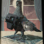 Photography Pigeon